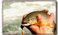 Himalayan Trout Fishing