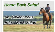 Horse Back Safari
